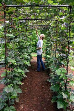 Bean Tunnel. Blog full of garden shots. Pinspiration!
