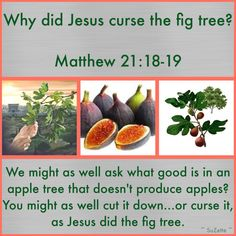 Remember the famous old fig tree