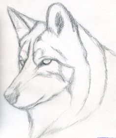 Easy pencil drawings for beginners. how to draw a wolf head, mexican wolf step 3 Easy Pencil Drawings, Pencil Drawings For Beginners, Pencil Drawing Tutorials, Art Drawings Sketches, Sketch Art, Cute Drawings, Drawing Ideas, Drawing Guide, Face Sketch