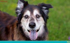Cães idosos: cuidados e atividades necessárias para manter a saúde