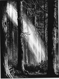 A Ruth Sanderson scratchboard illustration for The Golden Key by George MacDonald Kratz Kunst, Art Sketches, Art Drawings, Arte Indie, Ink Illustrations, Illustration Art, Botanical Illustration, Black Paper Drawing, Scratchboard Art