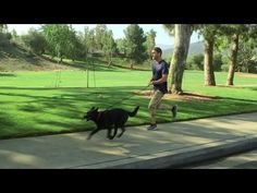 Lucky Dog - Not Such a Stroll in the Park