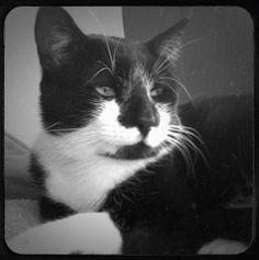 My cat Sylvester. Kim, Azusa, California. 6/20/13.