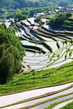 およそ800枚の棚田がある小豆島の中山。中山千枚田の観光スポット。