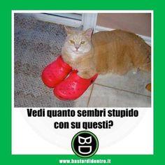 #bastardidentro #ciabatte #gatto #ipnoticamentebastardidentro www.bastardidentro.it