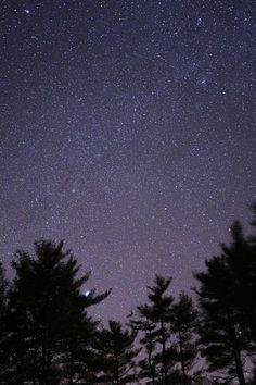 Silhouette of Trees Under Black Skies With Stars during Night Time