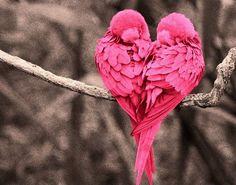 Oiseaux roses en coeur