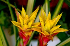 #pointed #flowers, #petals, #nature, #yellow, #green