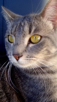 """""""There is no such thing as 'just a cat.'"""" --Robert A Heinlein"""