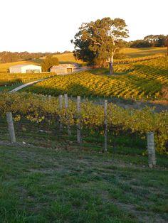 Sunset over vineyards South Australia