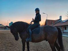 Riding Helmets, Horses, Hats, Animals, Animais, Animales, Hat, Animaux, Horse