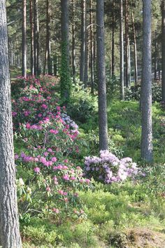 Terrace Garden, Garden Paths, Woodland Garden, Shade Garden, Log Homes, Scene, Yard, Exterior, Flowers
