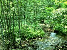 ▲源流にたどり着くにはこのうっそうとした草木が生える川を登らなければいけない
