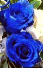 Thunder Blue Roses