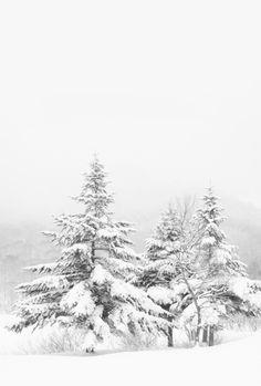 simple snow scene (by Nobuhito Mochizuki) Winter Love, Winter Snow, Winter White, Winter Christmas, Winter's Tale, Winter Scenery, Snow Scenes, Winter Beauty, Winter Landscape