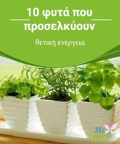 Vegetable Garden, Garden Plants, Outdoor Pots, Floral Flowers, Garden Projects, Trees To Plant, Houseplants, Feng Shui, Agriculture