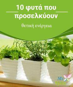 Vegetable Garden, Garden Plants, Outdoor Pots, Go Green, Floral Flowers, Garden Projects, Houseplants, Feng Shui, Diy And Crafts