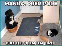Quem manda, manda!  Veja mais em: http://www.jacaesta.com/quem-manda-manda/
