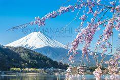 สถานที่เที่ยว - ตั๋วถูกจัง   ตั๋วถูกจัง.com   JAPAN   TRAVEL IN JAPAN   TRAVEL   JR PASS   YAMANASHI   YAMANASHI JAPAN   FUJI   www.wismatravel.com