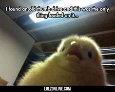 Another Chick Selfie#funny #lol #lolzonline
