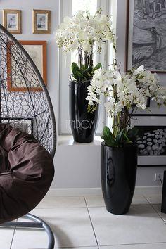 donice Fiberglass a w nich sztuczne storczyki - tendom. Vases Decor, Plant Decor, Welcome Home Decorations, Orchid Roots, Flower Arrangement Designs, Fleurs Diy, Decoration Plante, Orchid Arrangements, Flower Boutique