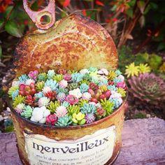 小さな庭の画像 by 000mai000さん | 小さな庭とセダム属と多肉植物とまいさんちのちまちま寄せと寄せ植えと秋の寄せ植えフォトコンテストとセダム寄せ植えとセダム丼と今日の一枚とちまちま寄せ