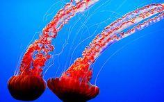 Foton Vatten-Alive - Medusa - Maneter - Bildspråk