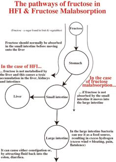The pathways of fructose in HF and Fructose Malabsorption