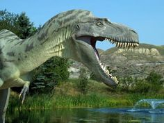 T Rex Had Most Powerful Bite Of Any Terrestrial Animal Ever