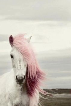 white horse with pink mane