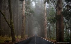 Road to Teide Vulcano | by Curaçao Images