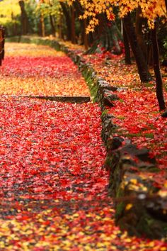 Red and Yellow Carpet in Kyoto, Japan - photo by U-92SAN 京都
