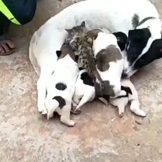 click visit for more - Favorite animals - Katzen, Hunde, Tiere Funny Animal Videos, Cute Funny Animals, Cute Baby Animals, Funny Dogs, Animals And Pets, Cute Cats, Gato Gif, Image Chat, Tier Fotos