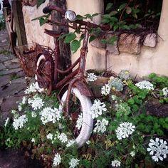 我が家の植栽担当は奥さん!その彼女がIG始めたらしい(*⌒▽⌒*)まだ投稿0(笑)これからかぶらないようにしようっと(爆) #@an.k19#まだやり方がわからないらしい#奥様目線で#ちなみに隣は僕ではありません#さびさび #自転車#オルラヤ