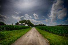 Bucolic 2 by Jim Crotty - Farm field of corn in July in Preble County Ohio by Jim Crotty