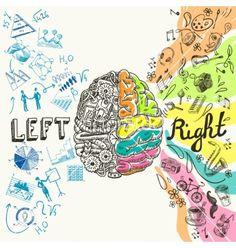 Brain hemispheres sketch vector. Left and right brain by macrovector on VectorStock®