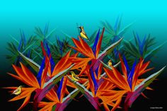 Sunbirds of paradise