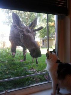 """Cat, """"Can the moose come in and play? We can play cat-and-moose games!"""""""
