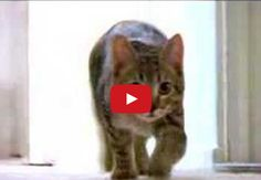 This Cat Video Has Been Viewed 77,000,000 Times.  You Will Watch It Twice. via LittleThings.com