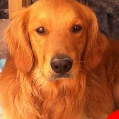 Dog...Noble, faithful, loyal, teaching, protection, and guidance