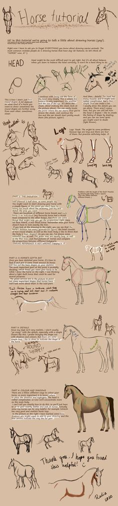 Horse's that u can sketch