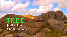 TREE -  NEIL SLADE, JULIA LU, and FRED POINDEXTER- BRAIN RADAR MAGIC Bristlecone Pine, Zappa, Photo Library, Lab, Brain, Old Things, Earth, Magic, Paintings