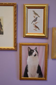 bedroom wall, frames accumulation and our tuxedo cat Batman - Hello it's Valentine