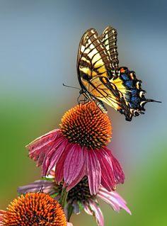 ' Butterfly-2 End of Summer' von Dennis Arculeo bei artflakes.com als Poster oder Kunstdruck $19.41