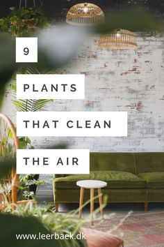 Did you know that? Read more on my plant-blog Did You Know, Outdoor Decor, Plants, Blog, Blogging, Plant, Planets