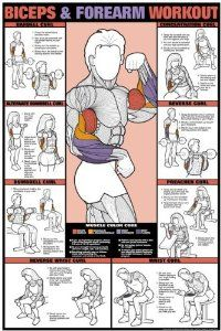 "Biceps & Forearm Workout 24"" X 36"" Laminated Chart"