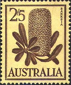 Australia 1959 SG 325 Flowers Banksia Fine Used SG 325 Scott 329 Condition Fine Used Only one post charge applied on multiple purchases Details N B Australian Gifts, Australian Native Flowers, Australian Plants, Australian Vintage, Flowers Australia, Buy Stamps, Vintage Stamps, Fauna, Stamp Collecting