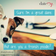 Online dating humour datemy.co.uk animal humour, dog, cute, truth, safety online, online dating, dating, love, help find love, matchmaking, match, cupid, blind date, single,