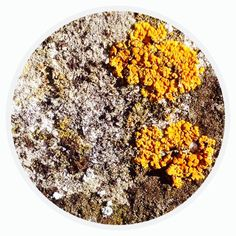 Circle - Organic Matter - 420 - Random Series - Diane Manton - 3rd October 2014 On October 3rd, October 2014, Organic Matter, Food, Circles, Bubbles, Essen, Meals, Yemek