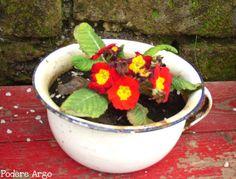 Un vecchio vaso da notte diventa una fioriera per primule #reuse